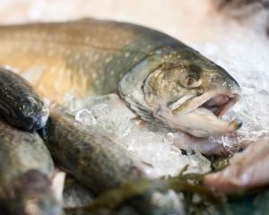 Frischer Fisch com Dating-Website